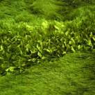 Високоворсный килим Sirtaki 1100Y - Висока якість за найкращою ціною в Україні зображення 2.