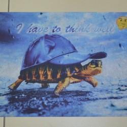 Коврик для входа Panorama turtle  - высокое качество по лучшей цене в Украине