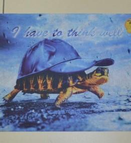 Коврик для входа Panorama turtle