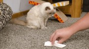 Как убрать запах мочи с ковра после домашних животных
