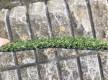 Искусственная трава Arcadia 6909 - высокое качество по лучшей цене в Украине - изображение 3