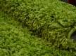 Высоковорсная ковровая дорожка First Shaggy 1000 , GREEN - высокое качество по лучшей цене в Украине - изображение 2